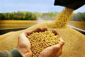 #Soybeans help to #regulate a #number of #aspects of the #metabolism, which should be able to help in reducing sleep disorders and the occurrence of insomnia. However, #soybeans also have a #high content of #magnesium, which is a mineral that is directly linked to increasing the #quality, duration, and restfulness of your sleep. http://goo.gl/RlwdJy