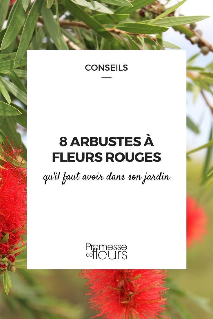 Planter Des Coquelicots Dans Son Jardin fleurs rouges : 8 arbustes qu'il faut avoir dans son jardin