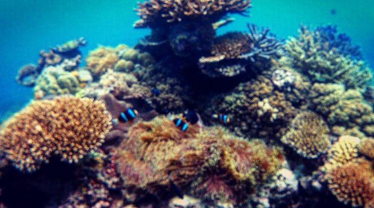 동영상 짜르면서 호주사진편집중 그립다! 내생애 첫 다이빙 #cairns #underthesea #findingnemo #greatbarrierreef #케언즈 #호주 #스쿠버다이빙 #그레이트배리어리프 #바다 by binibean http://ift.tt/1UokkV2