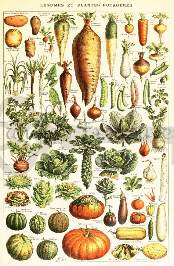 Vintage French Vegetables encyclopedia Clipart High