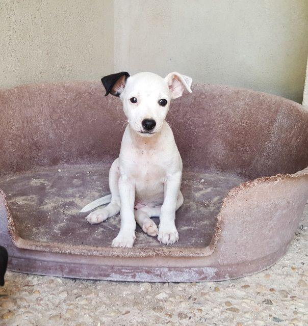 4 Cachorritos que nos dejaron este mes a las puertas del refugio. Contactar directamente con la protectora... #adoptar #mascotas #adopcion #perros #gatos