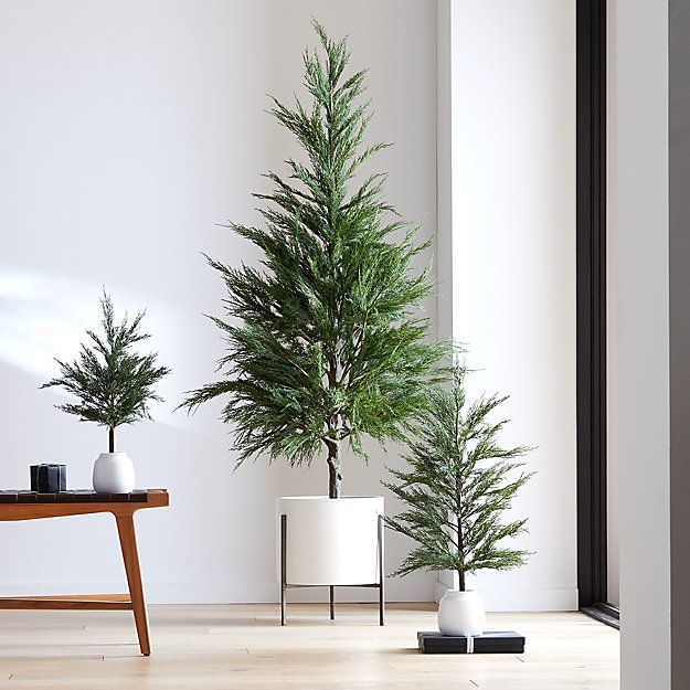 Potted Cypress Trees | Crate and Barrel | Home decor crate, Potted