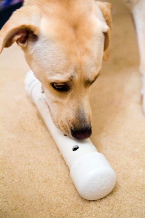 cane con un gioco fatto in casa DogBuddy