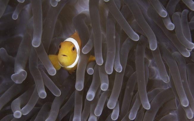 Índice de saúde dos oceanos mostra mau estado das regiões costeiras