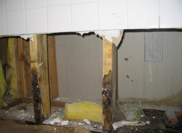 Is Mold Remediation Just A Big Scam?