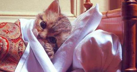 Cheap Pet Insurance: 26 questions to ask before you buy | Pictures of Cats - Band of Cats