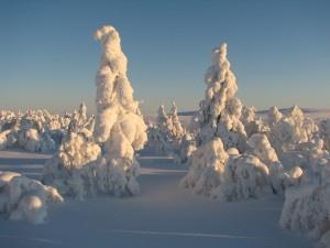 Saariselkä,  Cabins and activities in Saariselkä http://www.saariselka.com