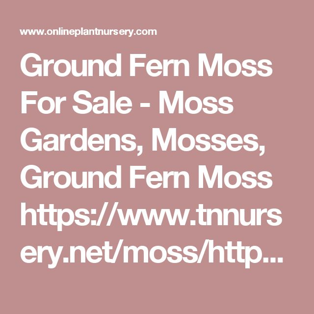 Ground Fern Moss For Sale - Moss Gardens, Mosses, Ground Fern Moss https://www.tnnursery.net/moss/https://www.onlineplantnursery.com/moss-gardens/