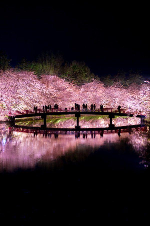 """nullさんのツイート: """"弘前公園の夜桜。桜前線を追いかけて青森まで行ってきました。 桜と影絵みたいな世界が綺麗 https://t.co/eVm5pcMqET"""""""