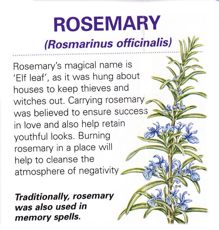 Magical herb rosemary health pinterest herbs very well and front doors - How to keep thieves away from your home ...