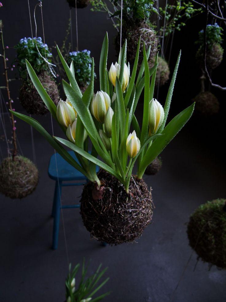 Die besten 25+ String garden Ideen auf Pinterest Hängefarn - blumenampel selber machen hangekorb