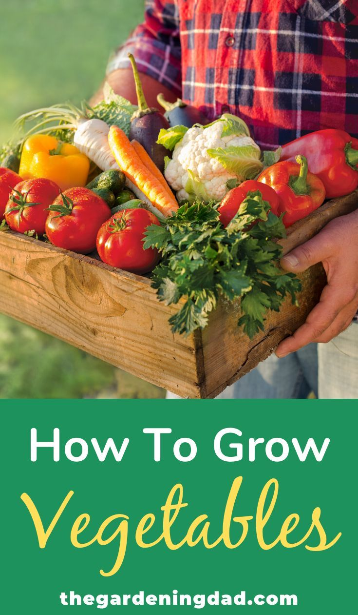 20 Easy Vegetables To Grow In Pots For Beginners Easy Vegetables