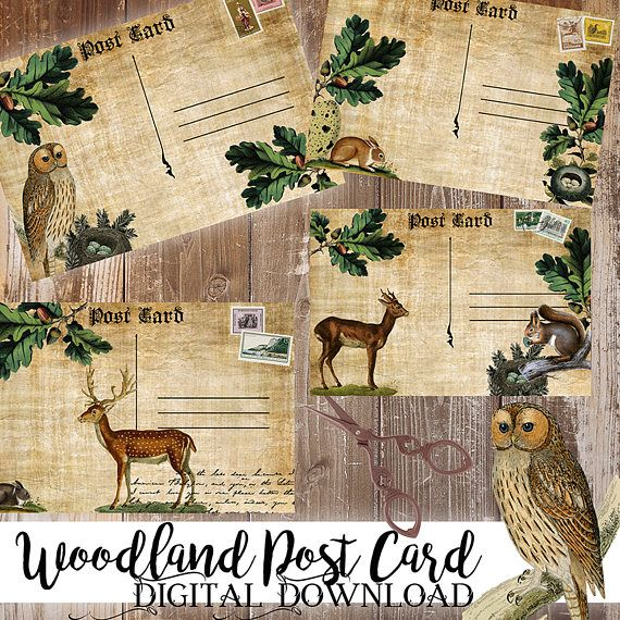 80% Off Woodland Post CardSnailMailAnimal