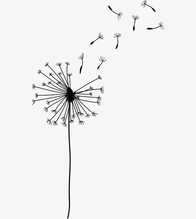 Image Result For Blown Flower Dandelion Drawing Cartoon Clip Art Line Art Drawings