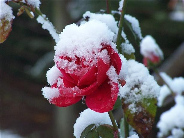 Far beneath the bitter snow   Lies the seed  That with the sun's love, in the spring  Becomes the rose. ~ Bette Midler