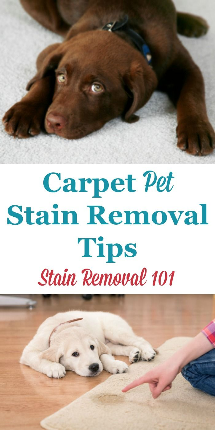 Here Is A Round Up Of Carpet Pet Stain Removal Tips To Clean Your After Accident This Includes Do It Yourself And Home Remes As Well