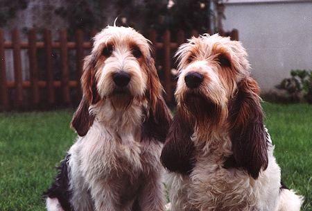 Love love love their floppy ears :) So cute. NoahsDogs.com