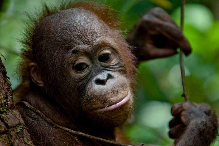 Indonesiens regnskogar brinner. Var med och uppmana företag och Indonesiens regering att ta sitt ansvar och stoppa bränderna.