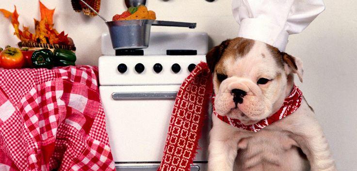 Cómo curar una quemadura a un perro - http://www.mundoperros.es/como-curar-una-quemadura-a-un-perro/