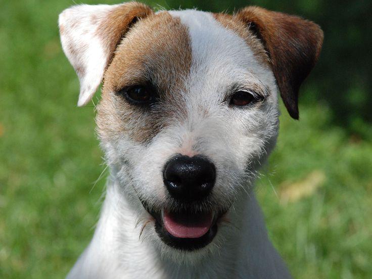 Smile For The Camera Dog Breedersjack