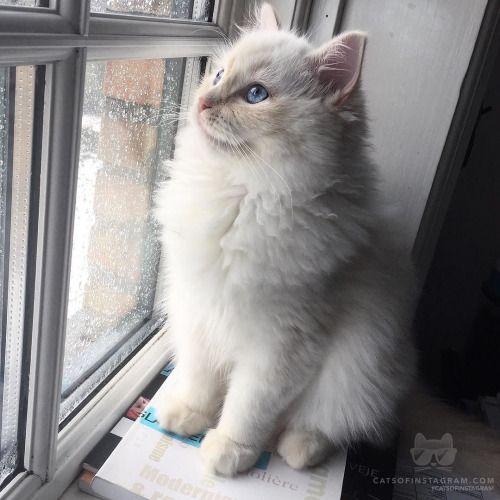From @klammelaura: Thinking about life #catsofinstagram [source: http://ift.tt/1qzQGV1 ]