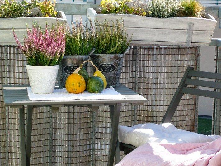 Rosliny na JESIENNO-ZIMOWE balkony i tarasy