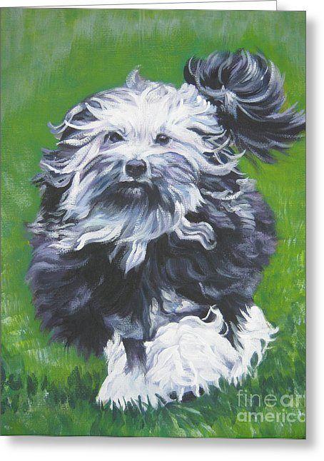15 Best Lowchen Images On Pinterest Dog Breeds Species