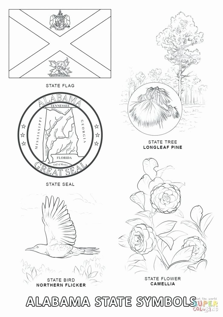 Maine state flower coloring page elegant virginia state