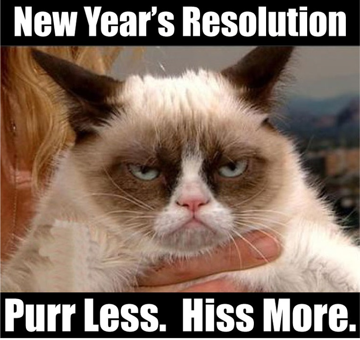 New years resolution. Pure less hiss more  GRUMPY CAT  Pinterest  Giv...