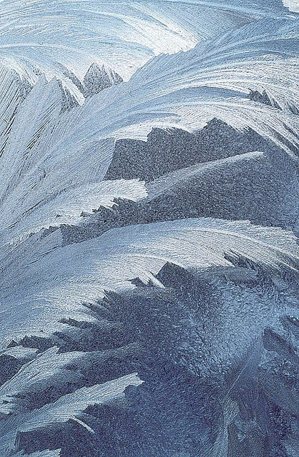 Frost on window-blue palm. I think this would make a wonderful fabric print.  #makemelieve