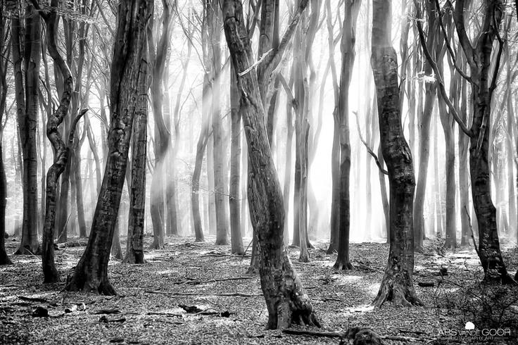 Blackwood by Lars van de Goor
