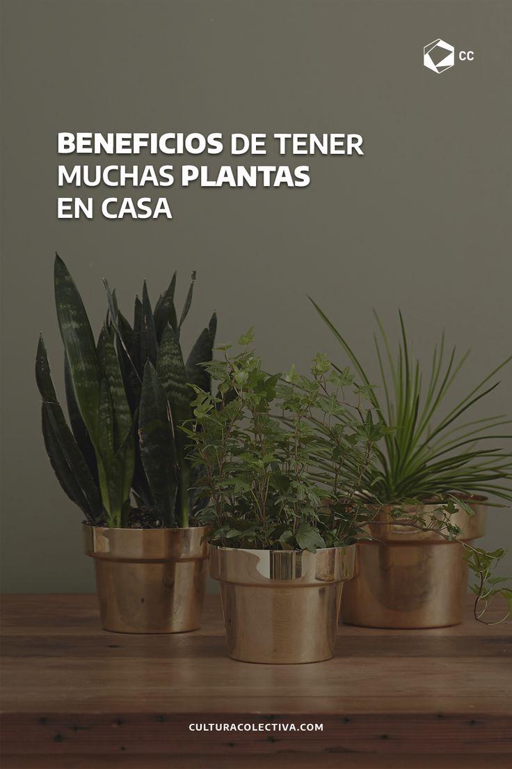 Éstas te pueden traer muchos más beneficios de lo que crees. Terrace Ideas, Planter Pots, Yoga, Amor, Happy Valentines Day, Container Gardening, Health And Wellness, February, Exercises