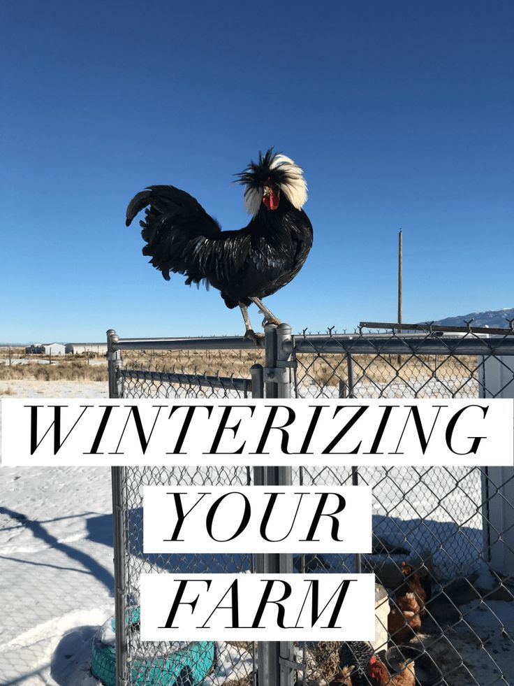 Simple easy steps to watering, and keeping your animals warm during the cold winter months!