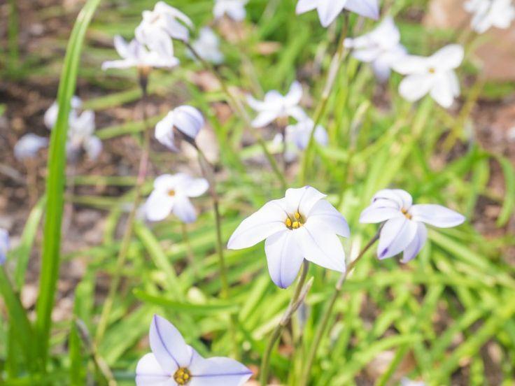 Fields of Purple Flowers