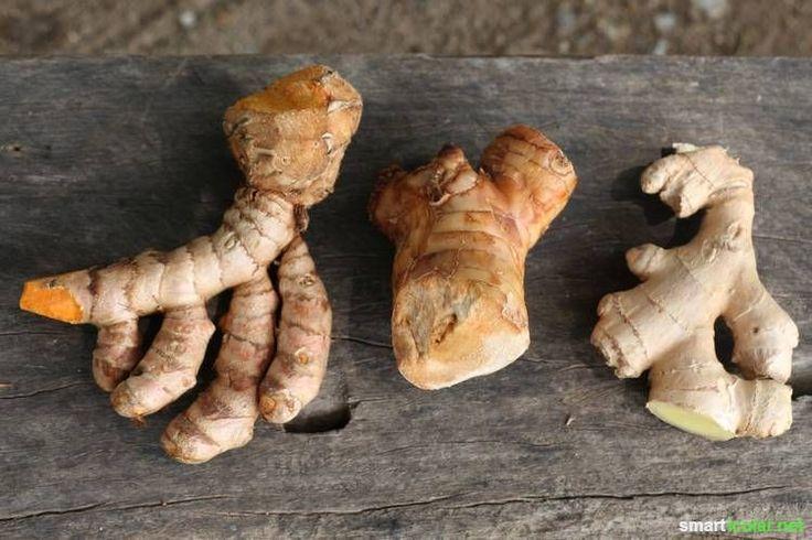 Die Natur bietet viele natürliche Gegenmittel zu gängigen Wehwehchen. Dieses Rezept aus für einen besonderen Kurkuma-Trunk hat es in sich!