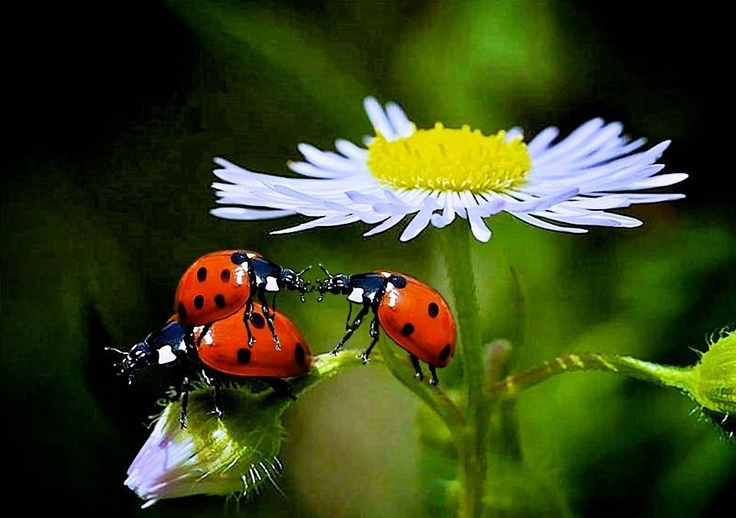 lady bugs bees flowers - photo #5