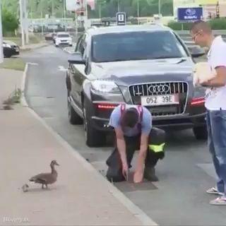 Mann rettete die Entenbabys – Heroes