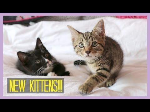 NEW KITTENS! | Sprinkle of Glitter - YouTube