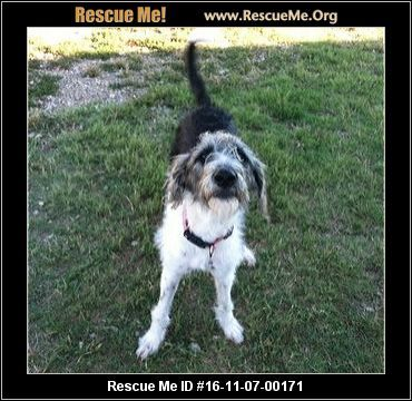 ― South Carolina Poodle Rescue ― ADOPTIONS ― RescueMe.Org