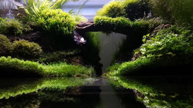 17 best images about aquascaping on pinterest shallow fish tanks and underwater - Aquascape espana ...
