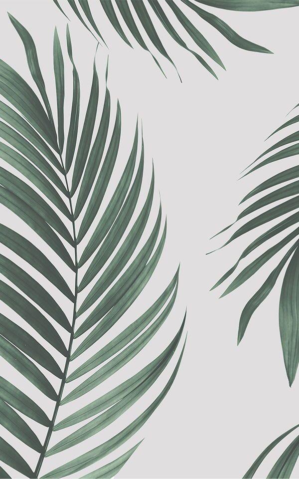 Boho Wallpaper Bohemian Wallpaper Murals Wallpaper In 2021 Palm Wallpaper Wallpaper Iphone Boho Leaf Wallpaper