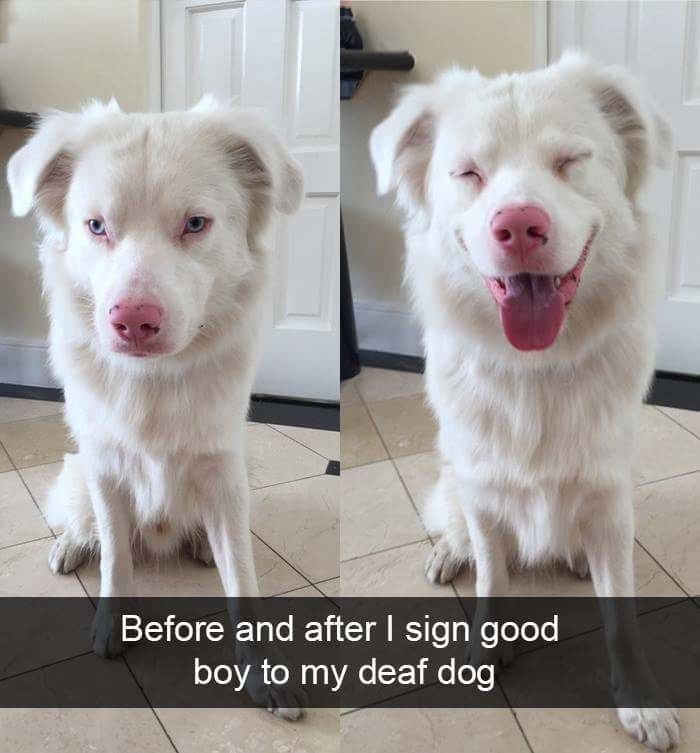 30 Adorable Doggo Snaps That Ll Warm Your Cold Heart Funny