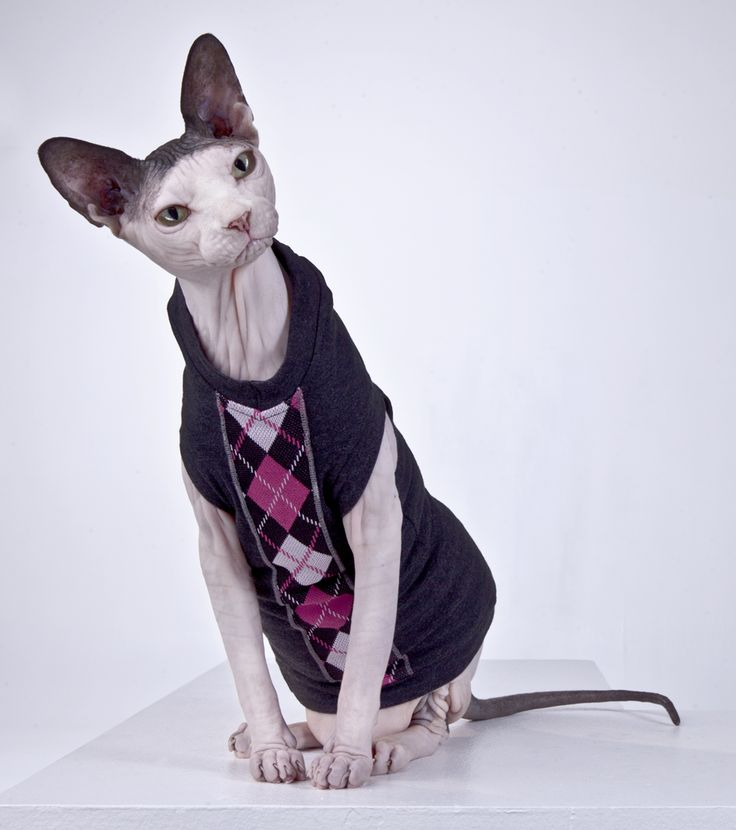 """LIMITED EDITION line of Sphynx Cat Wear clothing. These """"one off's"""" will not be produced again. Get them while they are hot!"""