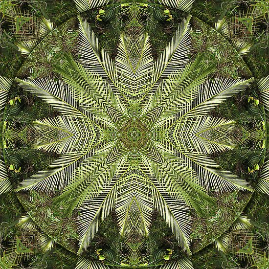 Forest Fern Mandala - Using personal images to design spiritual mandalas - from a forest in south west Australia - please Pin it but ask me if you want to use for something else, (C)2013 haymelter
