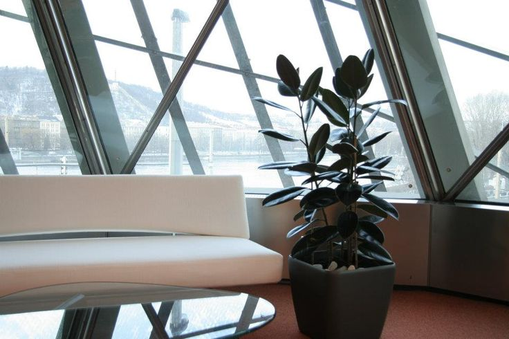 Indoor plant in an office by ROSMARINO