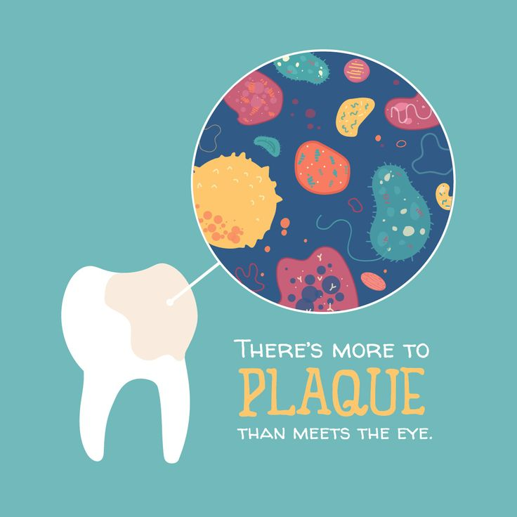 DID YOU KNOW? On average, plaque contains about 300 different species of bacteria!