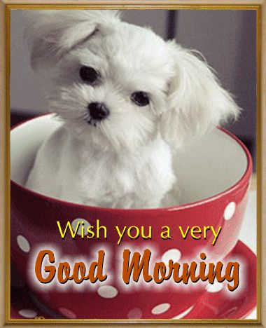 Send this #Cute #Puppy to your loved ones to wish them a cuddlesome #GoodMorning. #Ecard. www.123greetings.com
