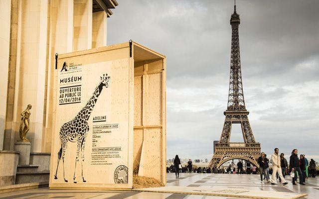 Les animaux sauvages du Parc Zoologique sont de retour à Paris