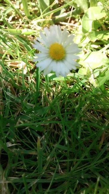 Flor del jardin de mi jefa