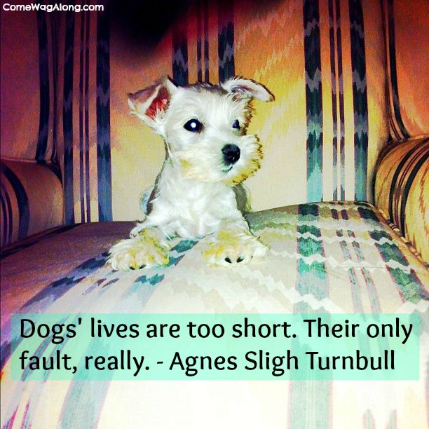 The Best Dog Quotes - #DogQuotes #Dogs #Quotes